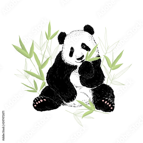 Photo Cute panda bear eating bamboo leaves