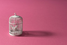 Bird Caught In A White Cage On A Pink Background. Minimal Art Design