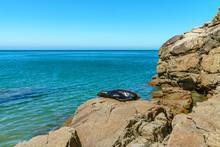 Seal On Rocks On A Beach,abel Tasman National Park, New Zealand 1