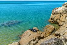 Seal On Rocks On A Beach,abel Tasman National Park, New Zealand 2