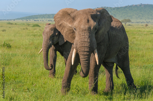 Photo  Mother elephant protecting her baby