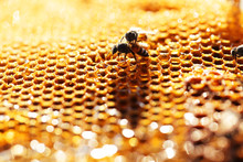 Close Up Of Honeybee On Bee Hive With Beautiful Bokeh.