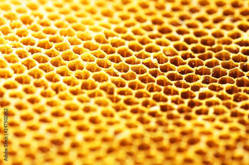 Türaufkleber Makrofotografie close up of hexagon texture golden bee hive background.