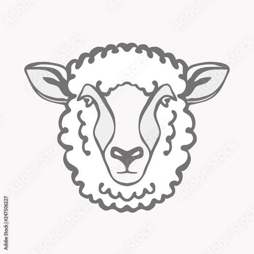 Fototapeta premium Wektor ilustracji głowy owcy Merino