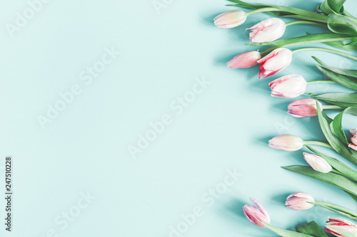 Flowers composition. Tulip flowers on pastel blue background. Valentines day, mothers day, womens day, spring concept. Flat lay, top view, copy space