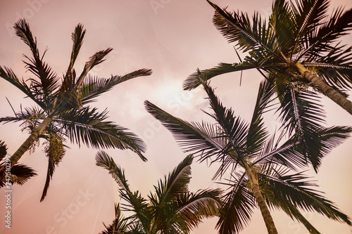 palm trees on pink background