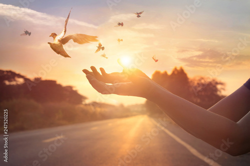 Canvas Print - Woman praying and free bird enjoying nature on sunset background, hope concept, soft focus
