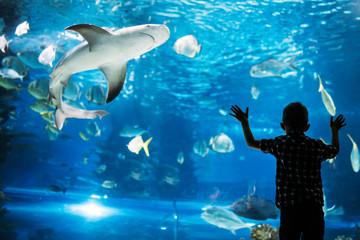 Sylwetka chłopiec patrzeje ryba w akwarium.