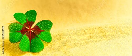Vierblättriges Kleeblatt, Glücksbringer