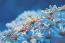 Blue Vintage Daisy Floral Background