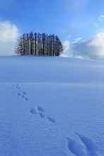 Footprints In The Snow, Japan