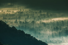 View Of Fog Over Alpine Forest