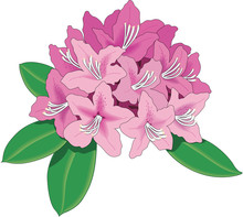 Rhododendron Vector Illustration