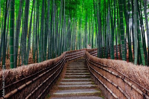 Fotobehang Bamboe The Bamboo Forest of Arashiyama, Kyoto, Japan