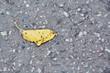 Torn yellow leaf lying on asphalt road.