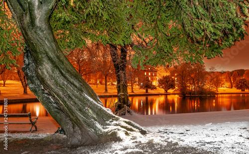 Fotografía Winter in the park