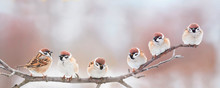 Beautiful Little Birds Are Sitting Next To Each Other On A Branch In A Sunny Spring Park And Chirping Merrily