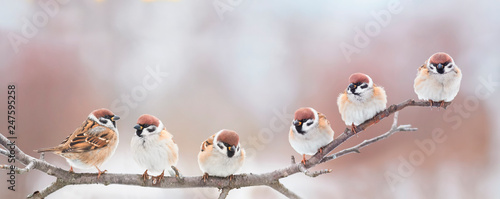 Spoed Foto op Canvas Vogel beautiful little birds are sitting next to each other on a branch in a Sunny spring Park and chirping merrily