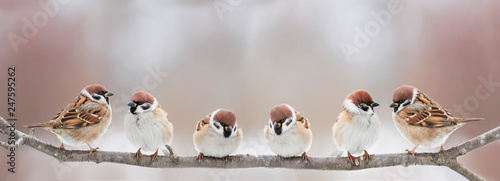 Spoed Fotobehang Vogel funny little birds sit on a branch in a spring Sunny Park and chirp