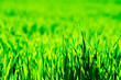 Leinwandbild Motiv green grass background with selective focus
