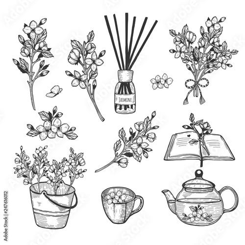 Photo  jasmine herb set