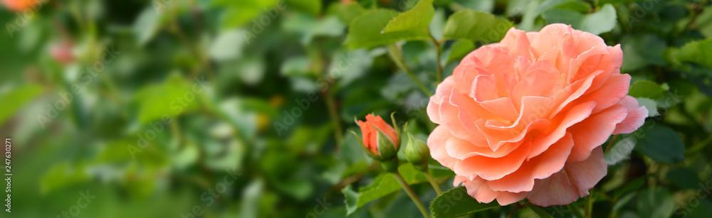 Fototapety, obrazy: Garten 843