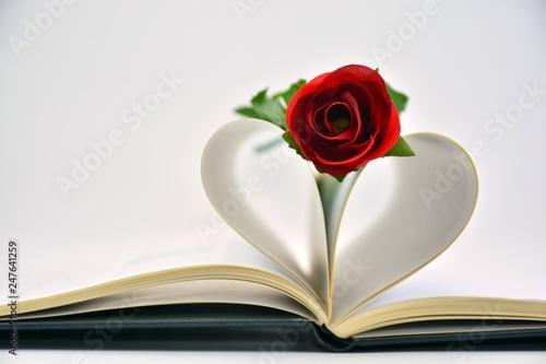 Fotografie, Obraz  Una rosa en el corazón de un libro