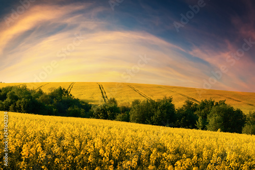 Foto auf Gartenposter Honig Colorful sunset on yellow rape field. Landscape photography