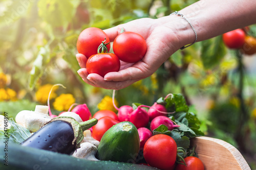 Fotografija  Woman´s hands picking fresh tomatoes to wooden crate with vegetables