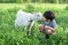 A Little Boy Wearing  Stripped Vest Squats And  Talks To A White Goat On A Lawn On A Farm They Look At Each Other Attentively