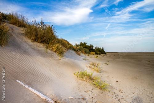 Deurstickers Strand Camargue, Francia