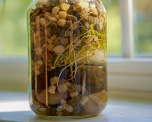 Plant Roots Growing In Glass Jar With Pebbles And Rocks