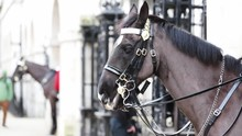 Traditional Household Cavalry ...