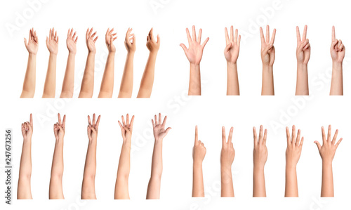Fotomural  Set of woman hands isolated on white background