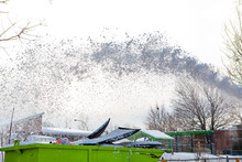 Snow Being Blown In The Sky. C...