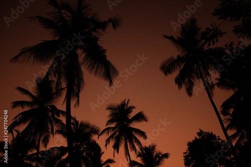 Foto auf AluDibond Hochrote Exotic Orange Sunset Palm Silhouette Landscape. Sri Lanka Beach