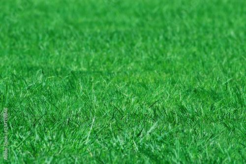 Fotobehang Cultuur Grassy Time