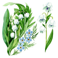 Forget Me Not And Lily Of The ...
