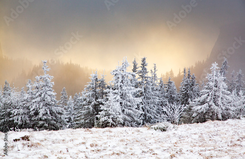Tuinposter Grijs winter landscape with snowy fir trees in the mountains