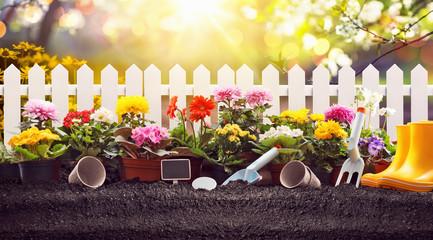 Koncepcja ogrodnictwa. Kwiaty ogrodowe i rośliny na słonecznym tle