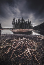 Dry Roots And Wood On The Shore Of Foldsjoen Lake. Low Water Level.