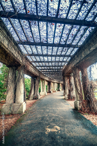 Aluminium Prints Old abandoned buildings gloomy and dark corridor with columns that were covered with bushes