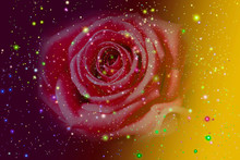 Background Space Rose Of The World