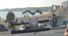 The Seagull Sits On Fishing Tackles, A Fishing Net, The Remains Of Fish, A Beach, Fishing Boats, Against Fishing Lodges