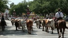 Cattle Drive, Fort Worth Stock...