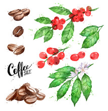 Set Of Coffee Beans And Berrie...