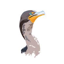 Florida Everglades National Park Cormorant Detailed Vector Design - Logo, Bumper Sticker Idea