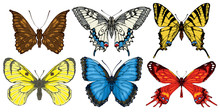 Collection Of Various Butterflies In Retro Style. Set Of Realistic Colorful Drawings Of Butterflies. Vector Illustrations Isolated On The White Background