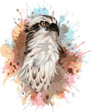 Osprey Bird Colorful Vector Portrait