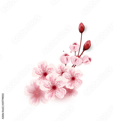 Vector Cherry Blossoms Sakura Flowers Isolated On White Background Flower Illustration Lovely Greeting Cards Elements Invitation Brochure Banners Posters Buy This Stock Vector And Explore Similar Vectors At Adobe Stock Adobe Stock